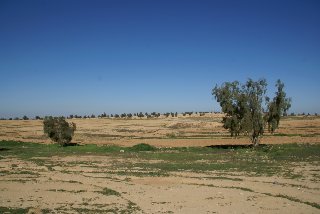 View from Bedouin village of Al-Araqeeb, JNF trees on the horizon